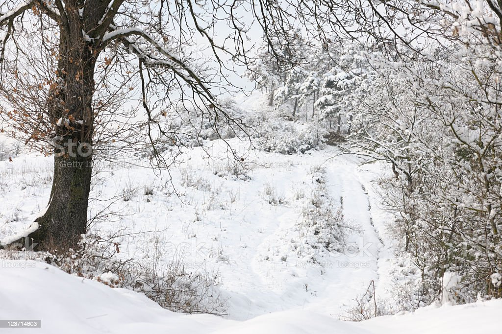 Bare Tree Framing Woodland Trail in Snow royalty-free stock photo