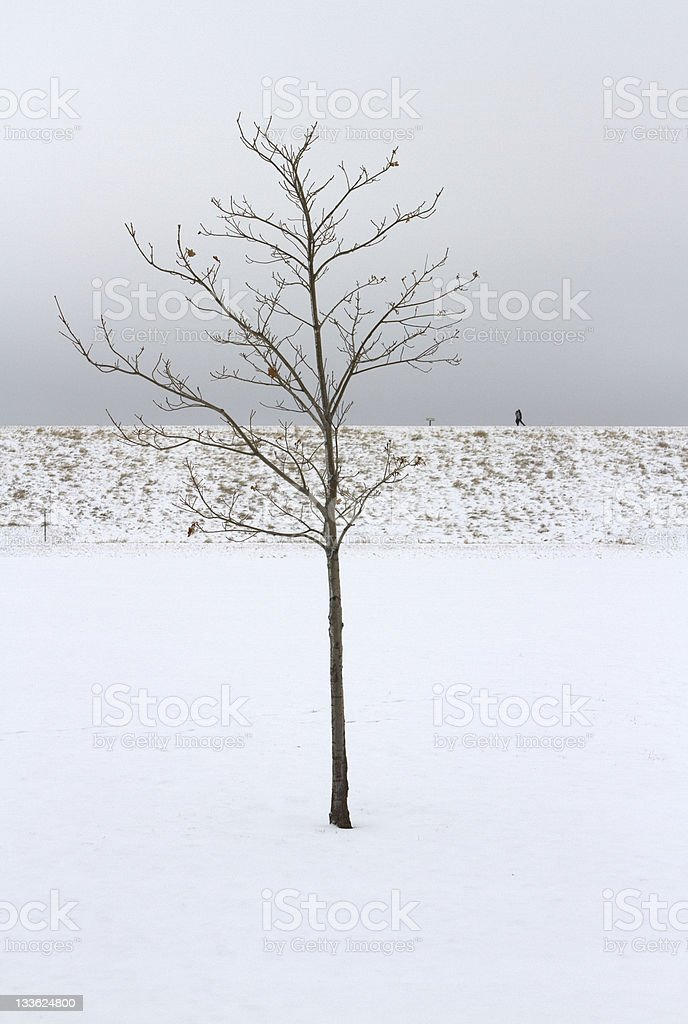 Bare Tree in Winter stock photo