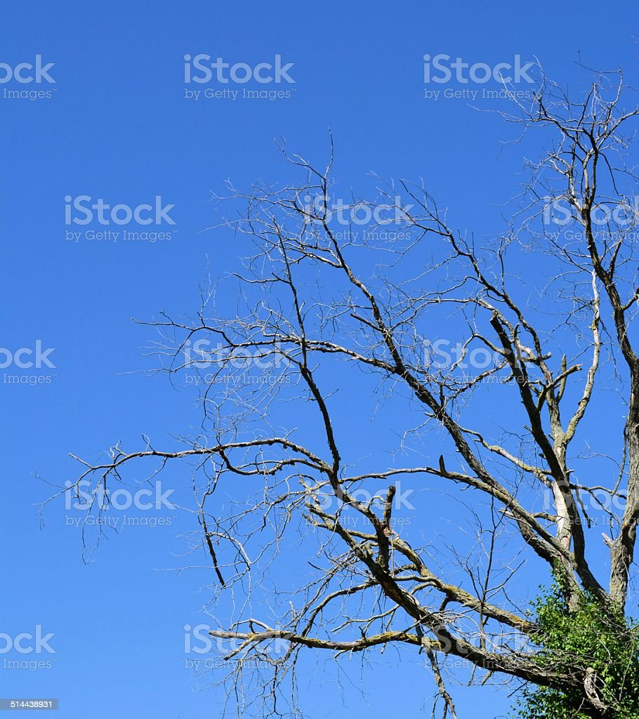 Bare Tree Limbs Against Blue Sky stock photo