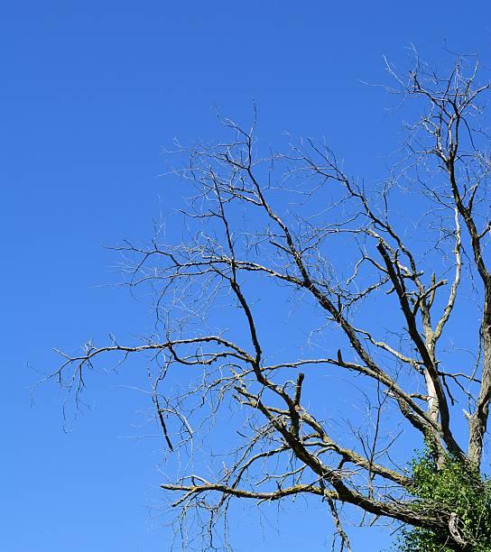 Bare Tree Limbs Against Blue Sky stock photo