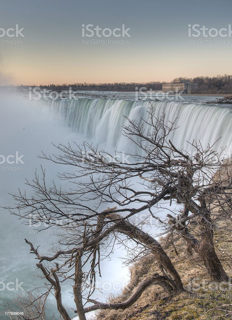 Bare Tree Niagara Falls stock photo