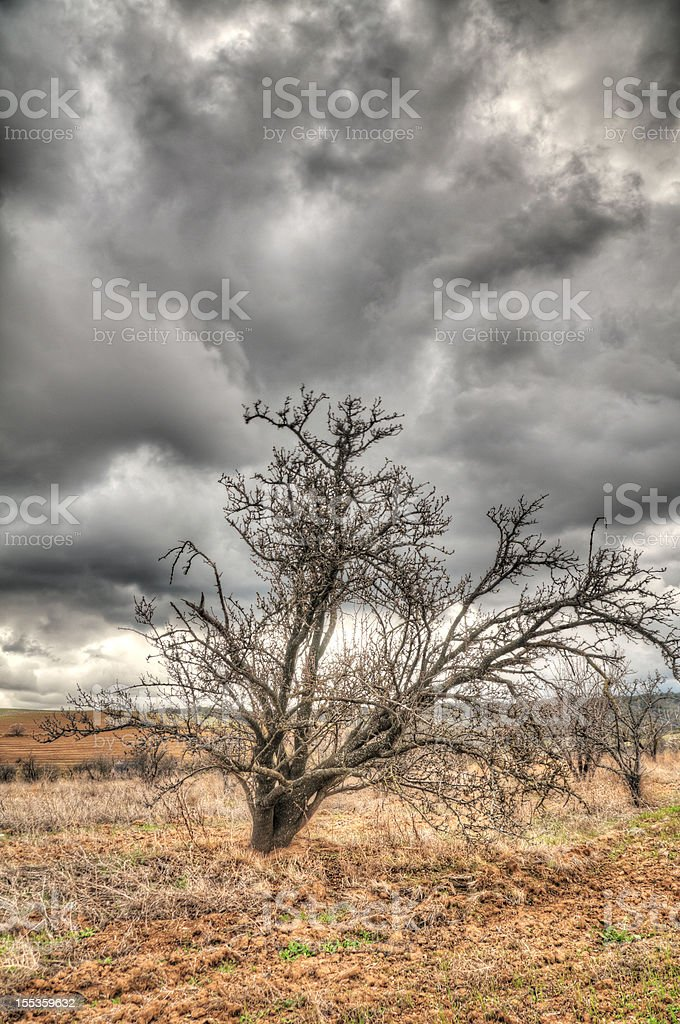 Bare Tree on a Stormy Day (HDR) stock photo