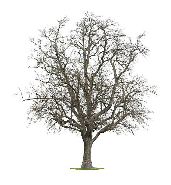Bare Tree stock photo
