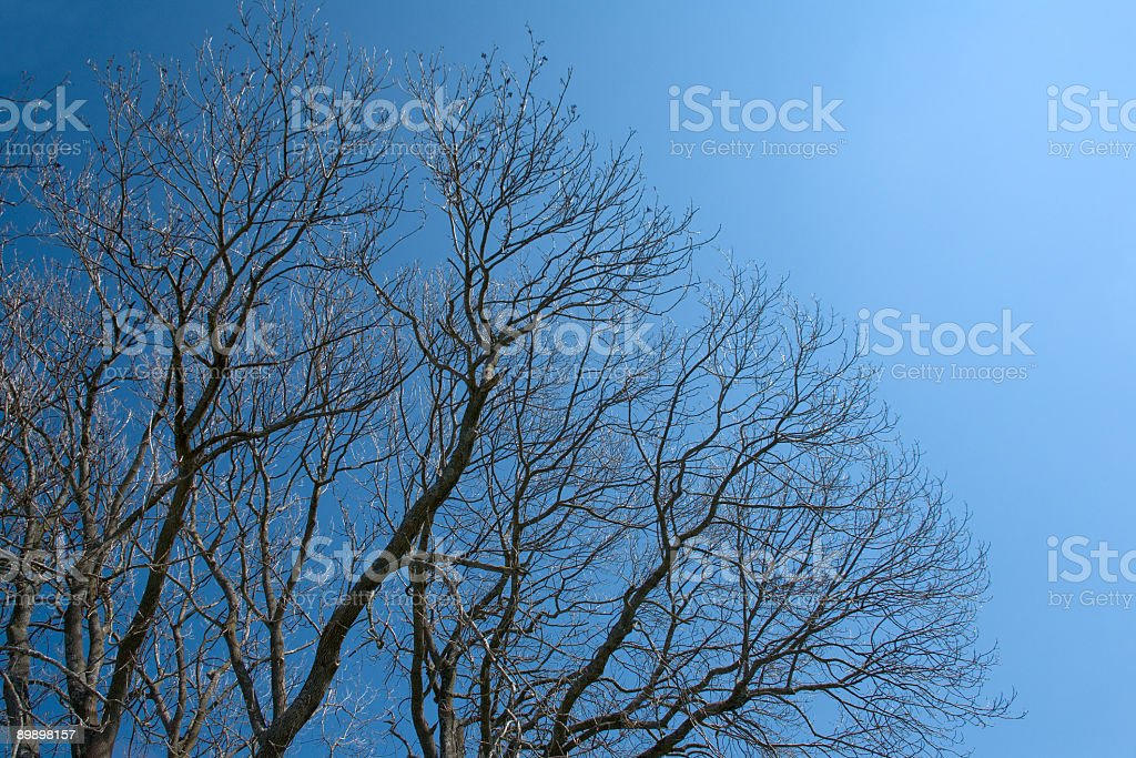 Árbol latente foto de stock libre de derechos