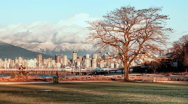 Bare Tree With Vancouver Skyline stock photo