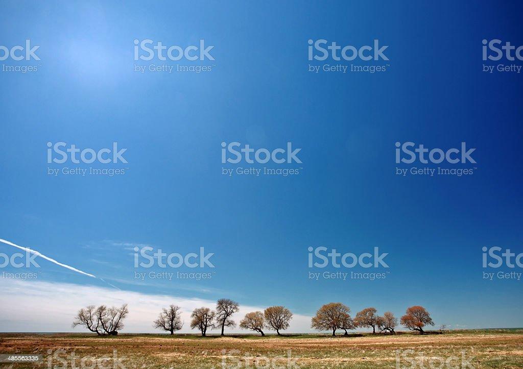 Bare trees along shore of Lake Manitoba stock photo