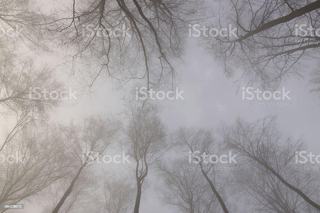 베어 나무 아래 royalty-free 스톡 사진
