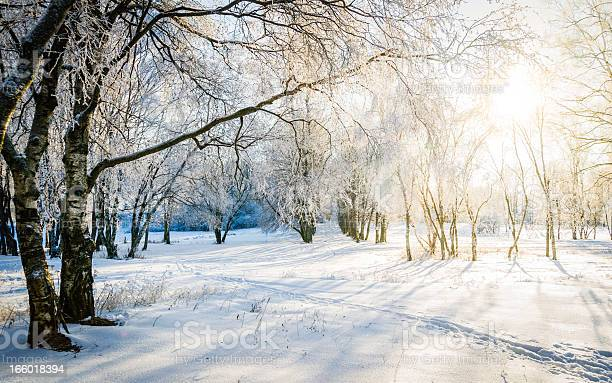 Photo of Bare trees in a forest in sunny winter