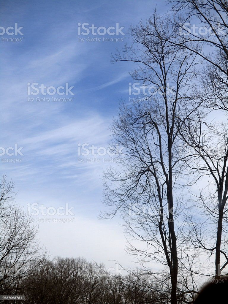 Bare Trees in Silhouette Against Blue Sky with Cirrus Clouds royalty-free stock photo