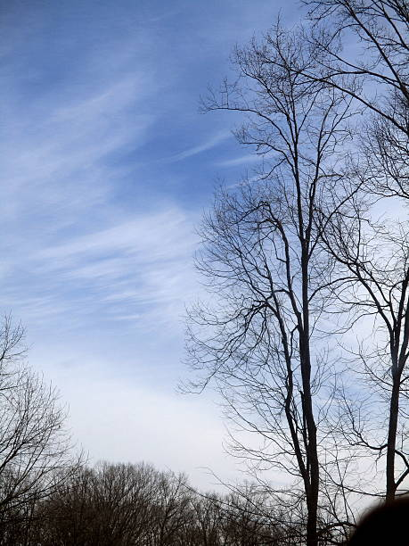Bare Trees in Silhouette Against Blue Sky with Cirrus Clouds stock photo