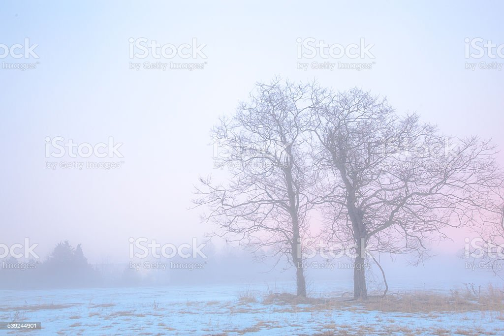 Bare trees in winter morning mist royalty-free stock photo