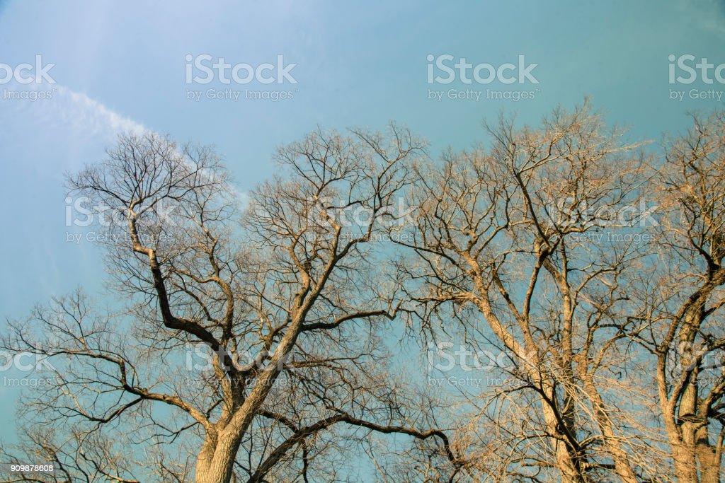 Kahle Bäume auf den Himmel Hintergrund – Foto