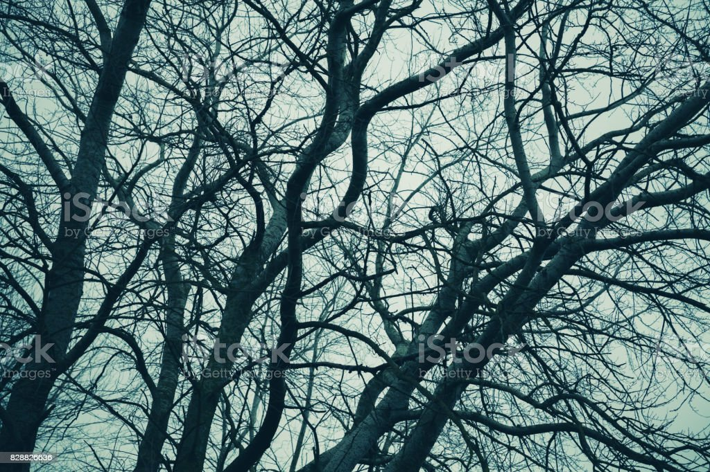 Bare trees over cloudy sky. Monochrome stock photo