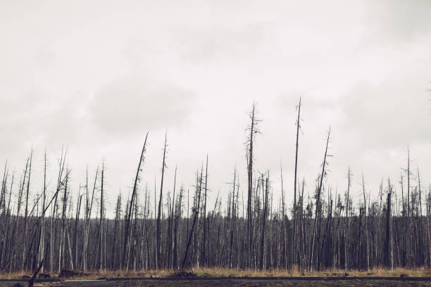 Nackten Bäume – Foto