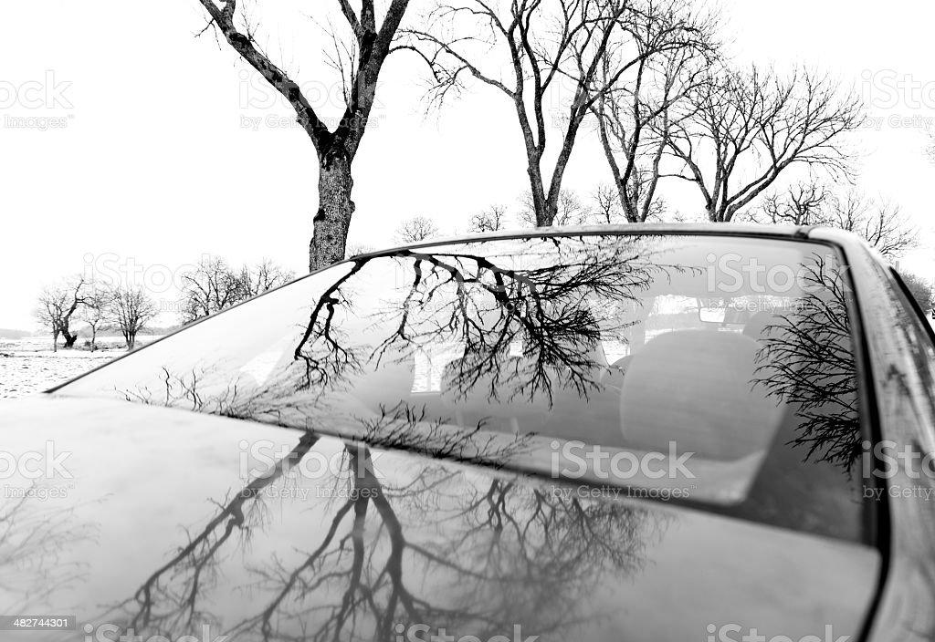 Nackten Bäume sich in dem Auto – Foto