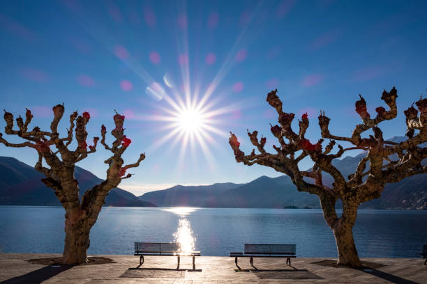 Bare Trees with Benches on the Waterfront with Sunbeam and Mountain stock photo