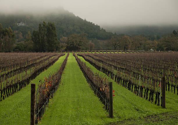 bare weinberge grünes gras unter foggy hills napa valley, kalifornien - robert weinberg stock-fotos und bilder