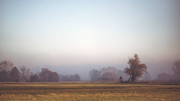 Bare willow trees in fog at the meadow Bare willow trees in fog at the meadow hunting blind stock pictures, royalty-free photos & images