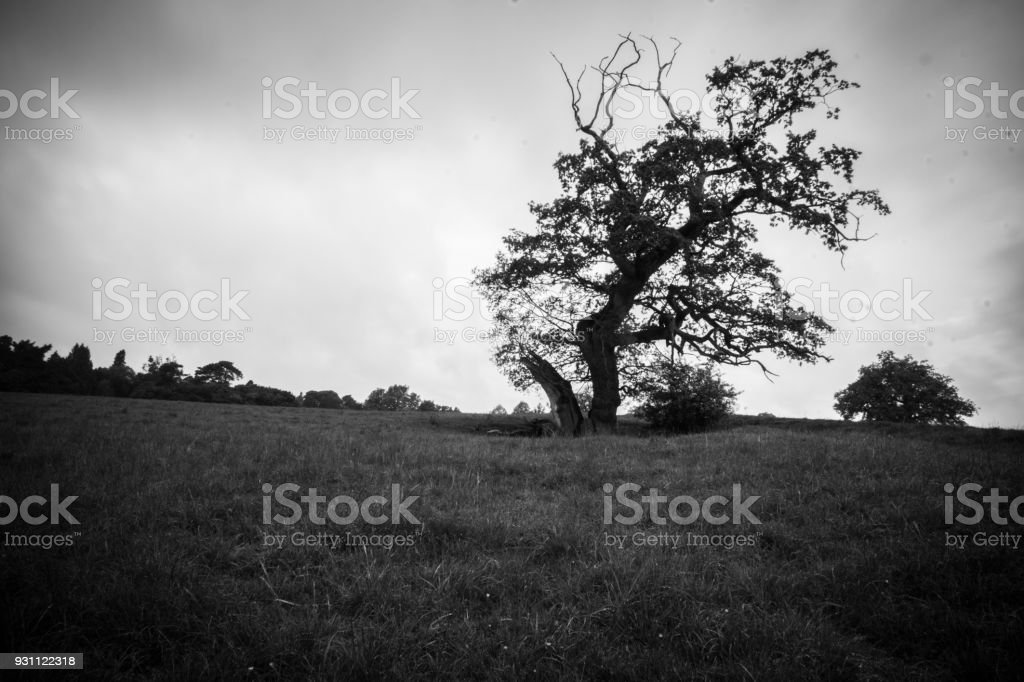 Bare winter tree stands in a meadow stock photo