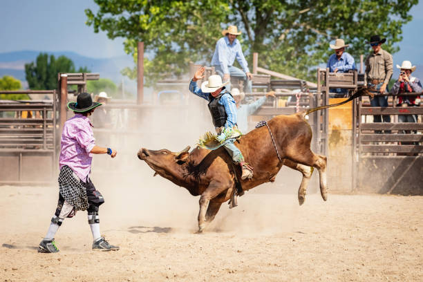 Bareback Bull Riding Cowboy Rodeo Action Clown Raging Bucking Bull stock photo