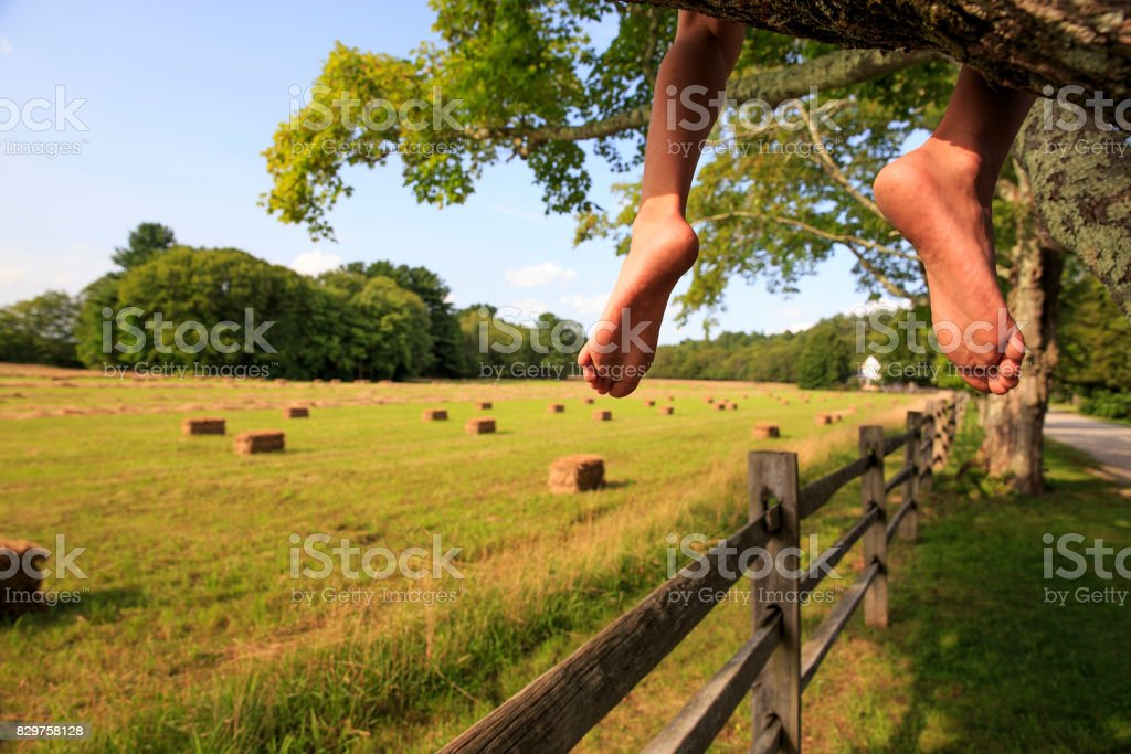 barefoot kid sitting on a tree stock photo
