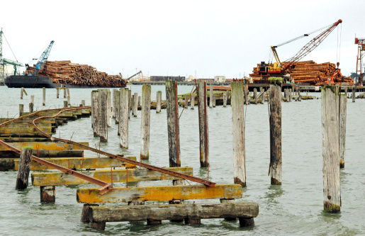 Barge on left with fir logs for pulp mill and barge on right with redwoods for lumber mill on Humboldt Bay in northern California
