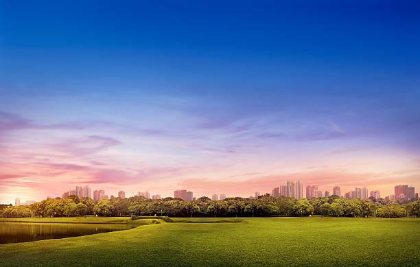 barigui park - curitiba urban landscape - curitiba stock photos and pictures