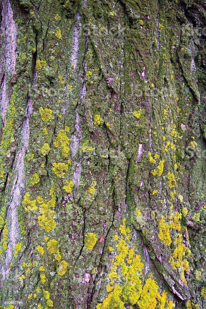 Baumrinde und moss  – Foto