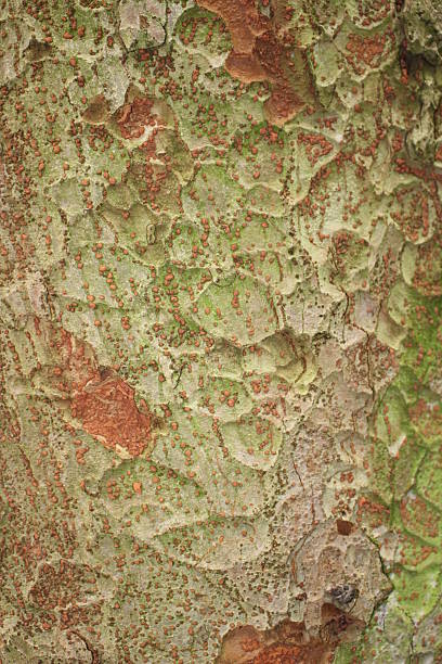 Bark background stock photo