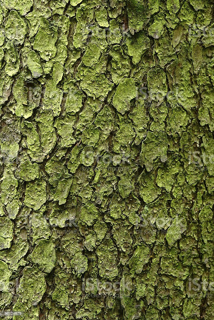 bark background royalty-free stock photo