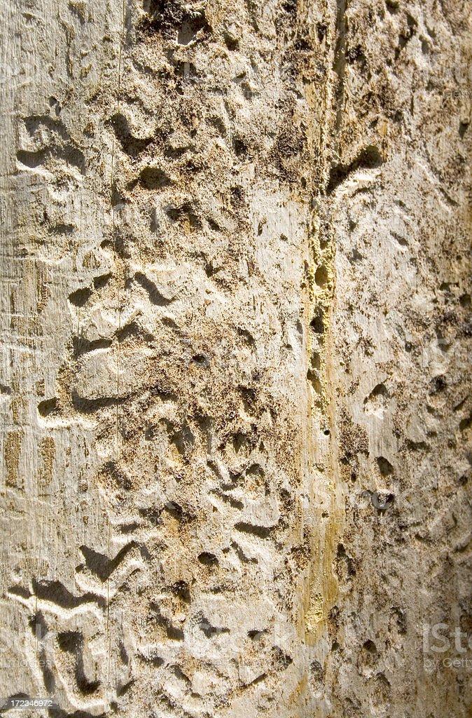 Bark Beetle Damage stock photo