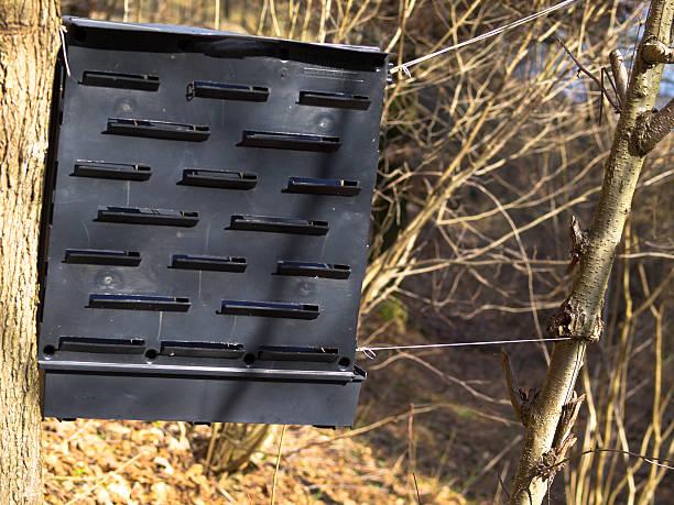 Bark beetle trap stock photo