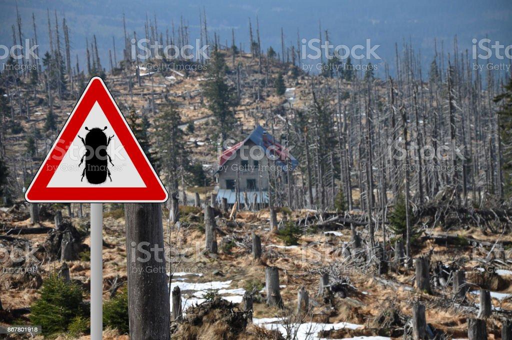 Bark beetle zone at mount Rachel stock photo