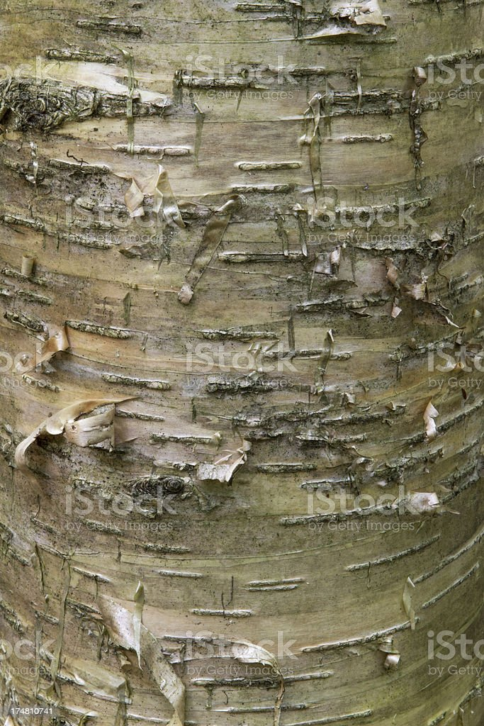 Bark close-up royalty-free stock photo