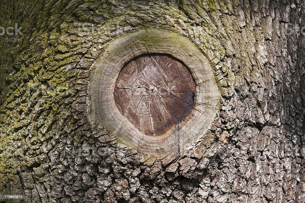 bark primer plano foto de stock libre de derechos