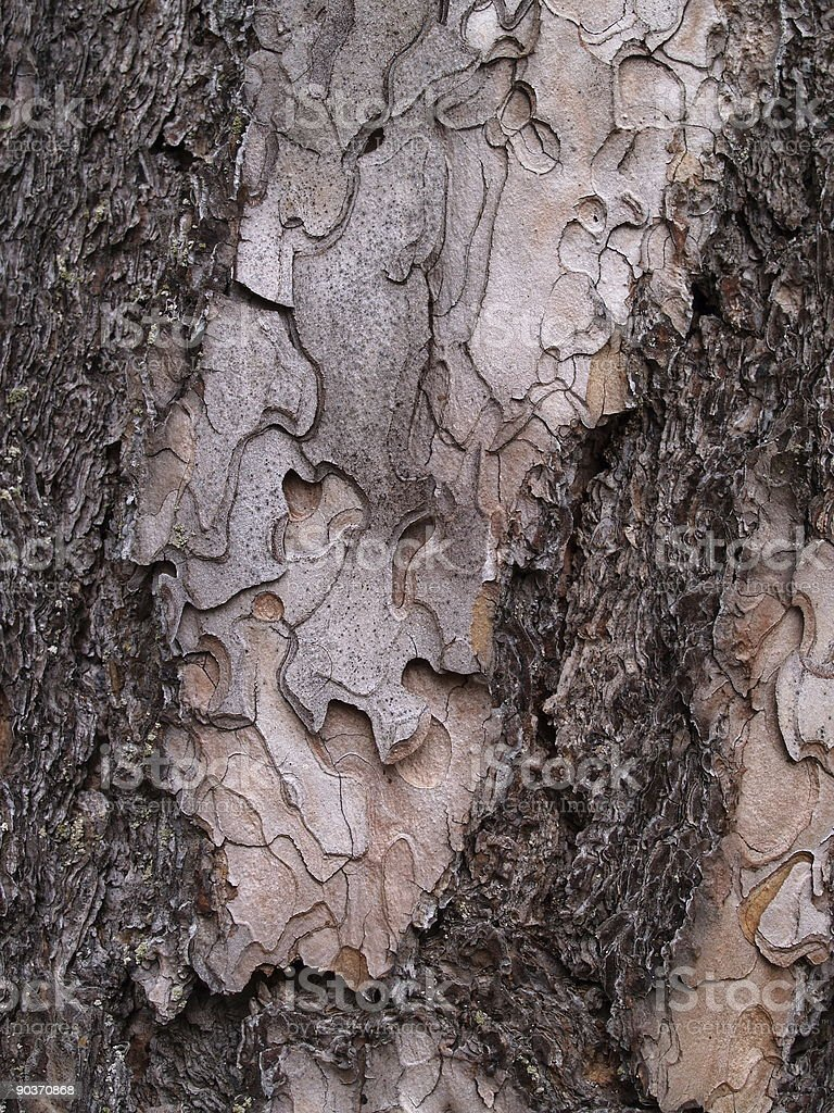 Bark Composition royalty-free stock photo