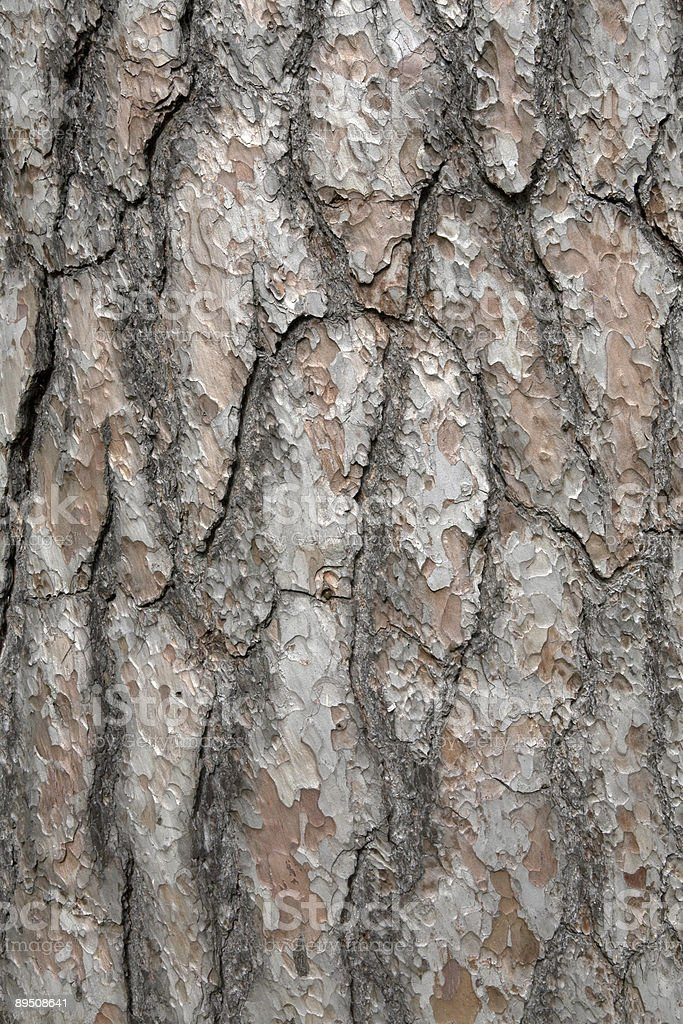 Bark Detail.Background royalty-free stock photo