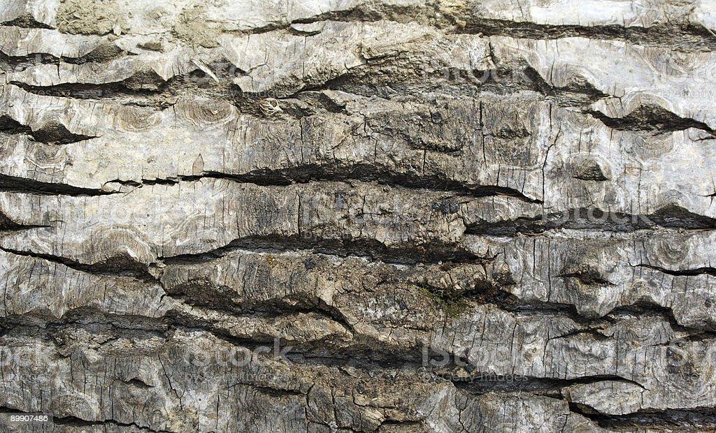 Bark horizontal royalty-free stock photo