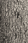 Bark Texture. Close up of a tree.