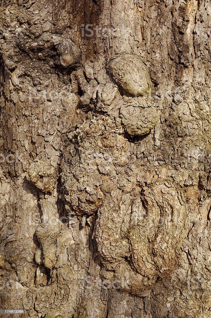Bark of a tree royalty-free stock photo