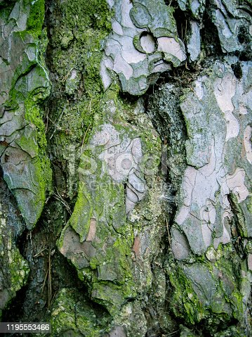 A bark of a very old tree