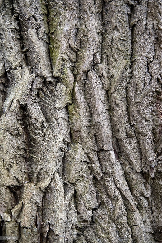 Bark of a willow tree royalty-free stock photo