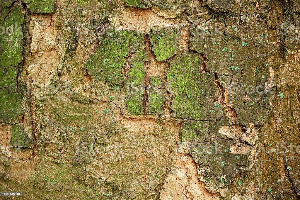 Bark of an old tree royalty-free stock photo