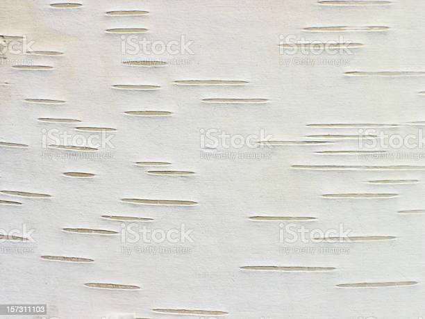 Photo of Bark of birch