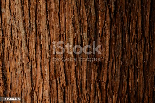 Close up of bark of cedar tree texture background.