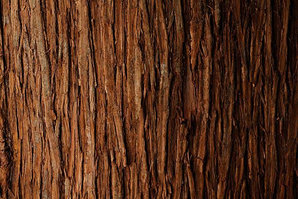 나무껍질로 백향목 애니메이션 배경 - 목재 재료 뉴스 사진 이미지