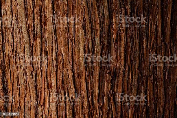 Photo of Bark of cedar tree texture background
