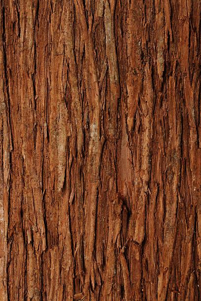 Bark of cedar tree textured background stock photo