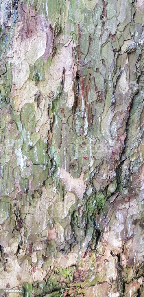 Bark of old tree. Close up natural grungy texture. Wooden background. royalty-free stock photo