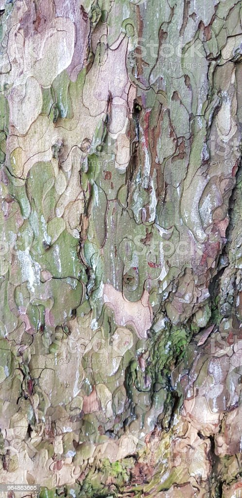 Bark of old tree. Natural wooden texture for grunge rough background. royalty-free stock photo